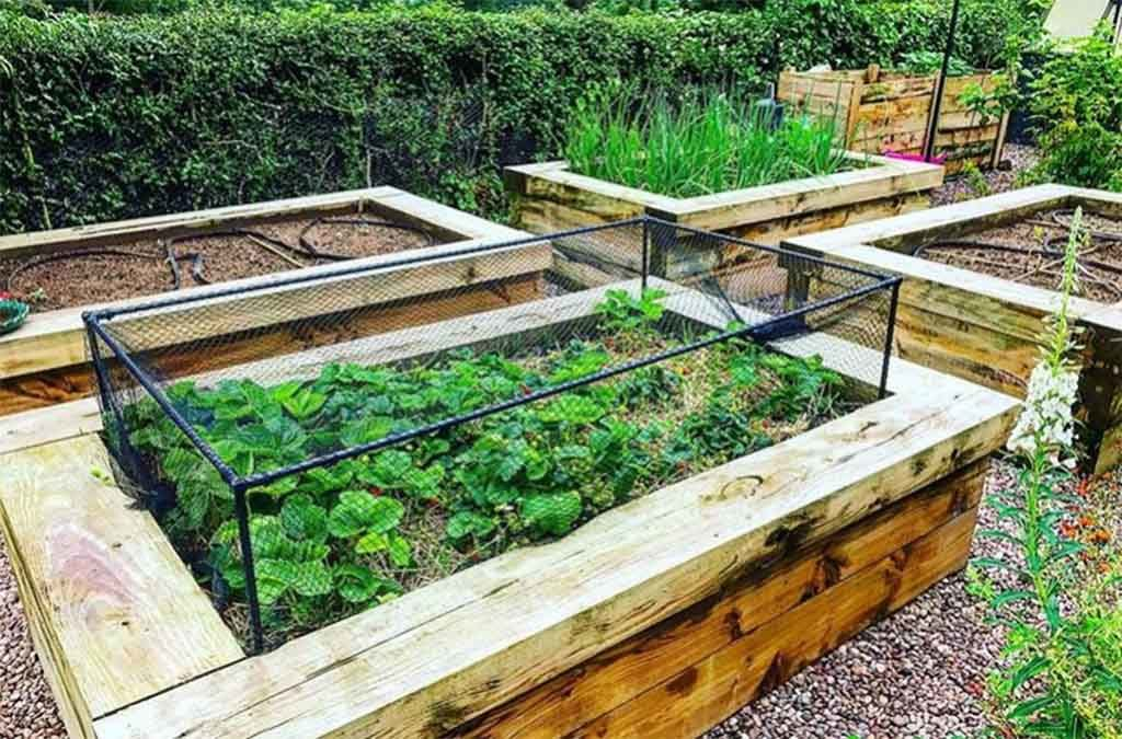 Guide To Raised Bed Vegetable Gardening For Beginners For You Easy Learnings