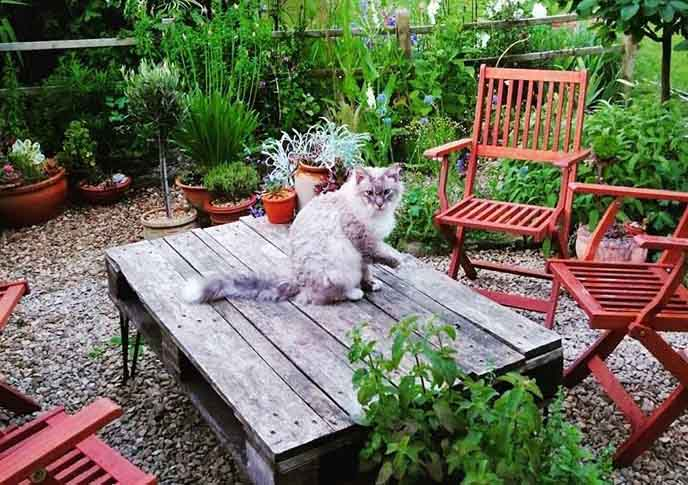 Hardwood table in the garden and a cat sitting on it