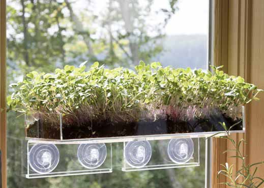 Window Garden Microgreens Bundle