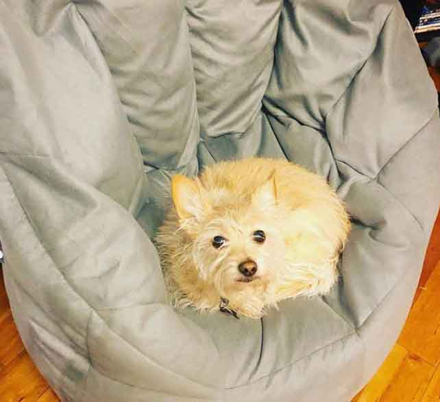 Dog sitting on bean bag chair